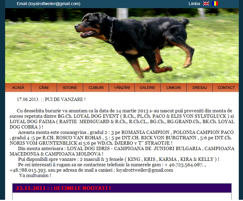 canisa loyal dog